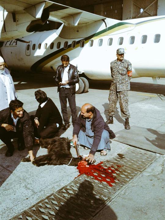 Cz9lwY1XcAACcxL Pakistan Airlines sacrifica animale pe pista