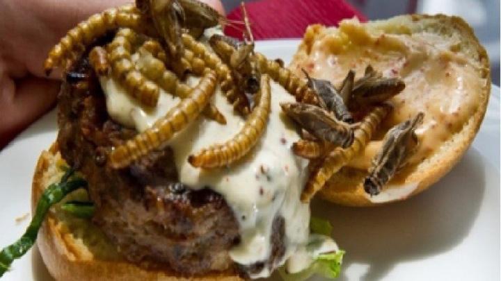 burger Burger cu insecte si viermi in Elvetia