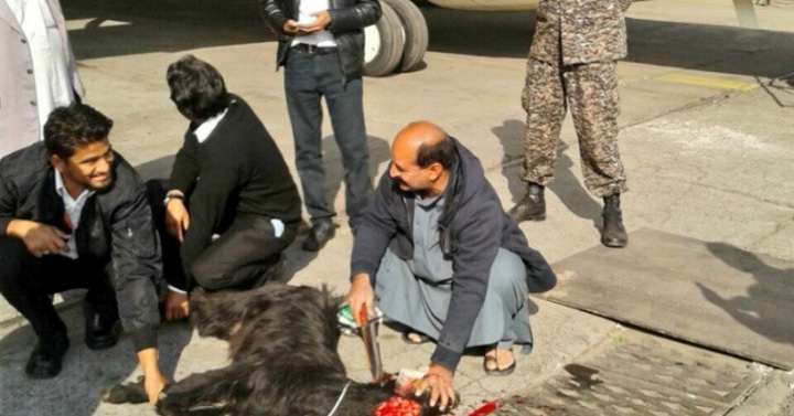 capra Pakistan Airlines sacrifica animale pe pista