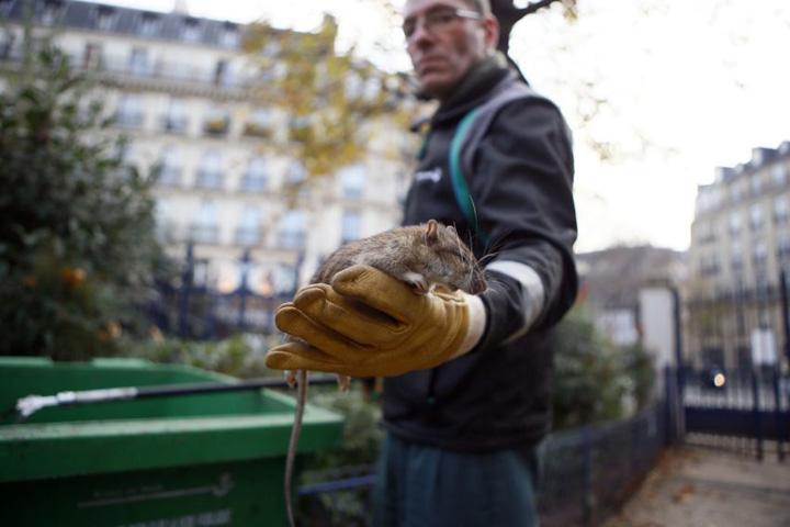 paris sobolani Paris, in razboi cu sobolanii