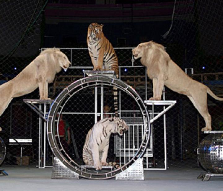151001 1 Animalele Circului Globus pleaca in Africa de Sud!