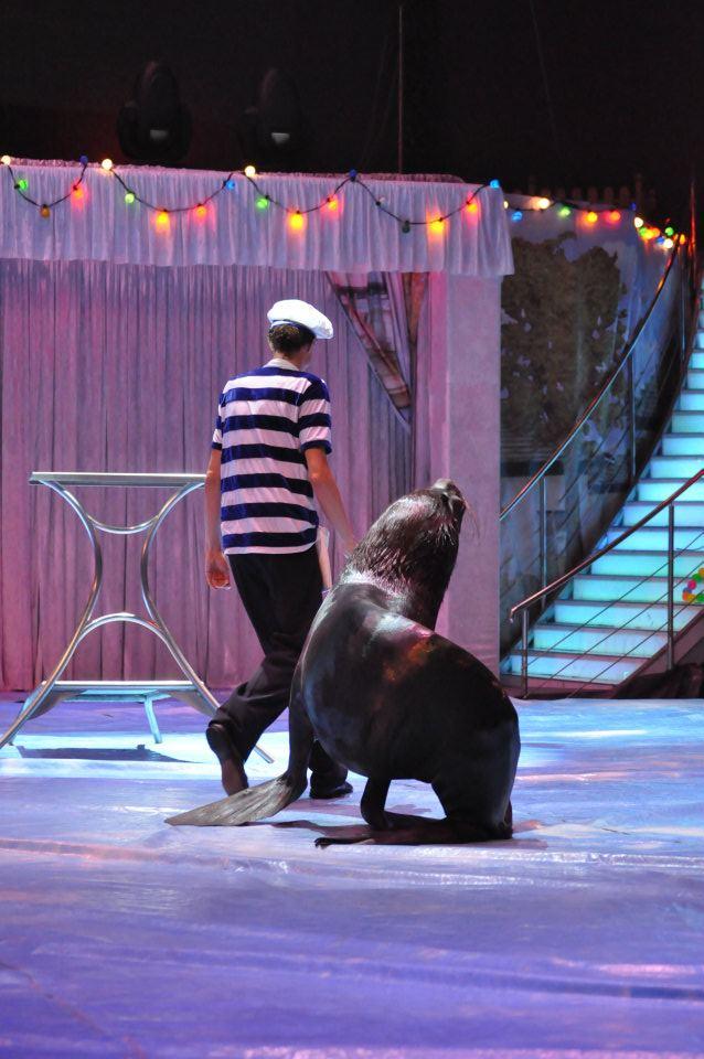 389765 373052349416703 1789970100 n anim Se anunta o schimbare esentiala in spectacolele circului bucurestean