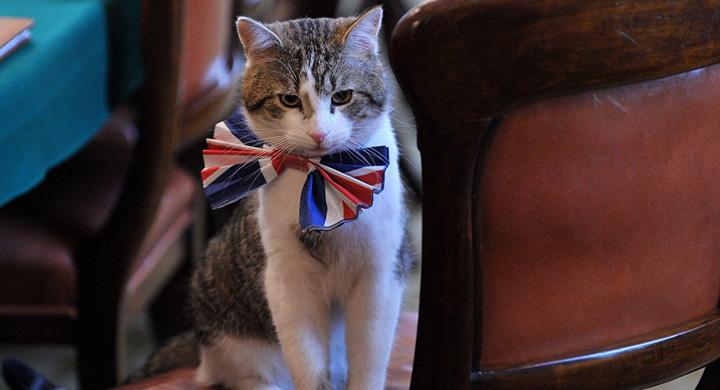 motan1 De frica teroristilor, Garda Palatului Buckingham isi schimba programul