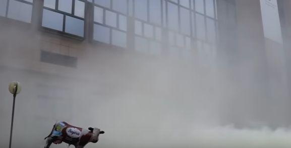 nin A nins cu lapte praf la Bruxelles! (VIDEO)