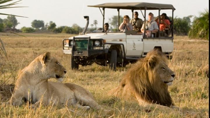 safari kenya 80274700 Bursa de Valori te trimite la lei africani!