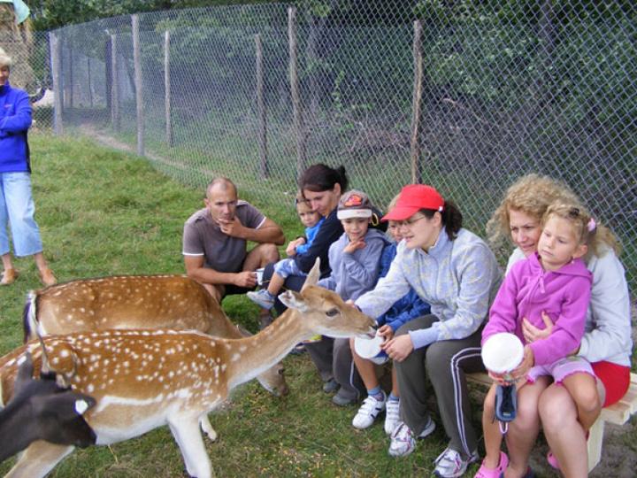 parc animale Moara de Vant, singurul zooparc cu animale de mangaiat din Romania