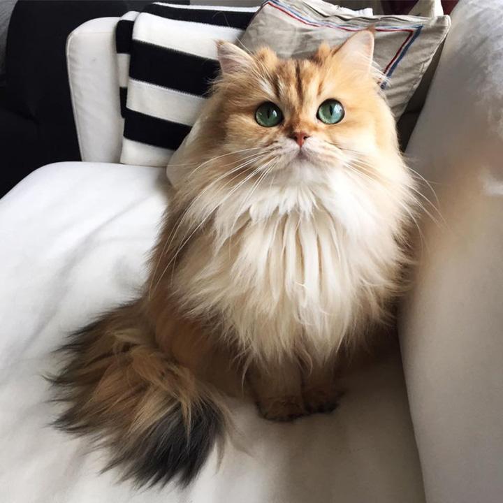 pisica Rusii inchiriaza pisici cu ora