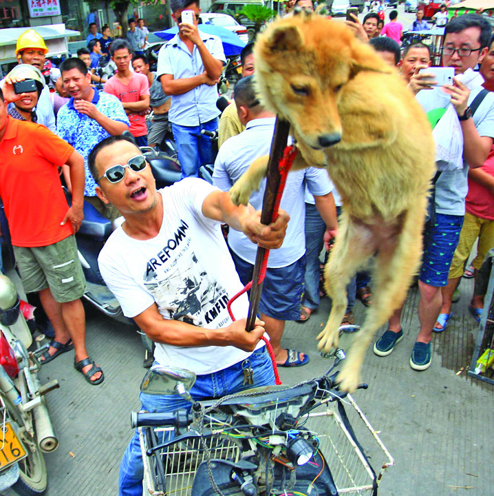 thousands of dogs will be eaten in china to celebrate the summer solstice 1434811849 Salveaza un caine, mananca un chinez!. Un retailer german de imbracaminte, fortat sa si ceara scuze