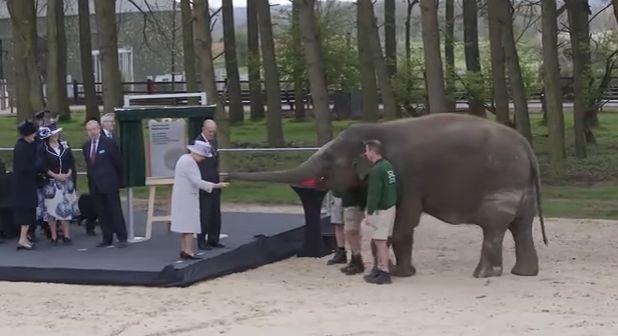regina Regina Elisabeta, filmata in fata unui elefant. Reactia amuzanta a pahidermului! (VIDEO)