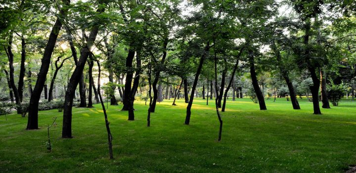 unnam 1 720x350 Primaria Sectorului 1 si comunitatea locala ecologizeaza Padurea Baneasa