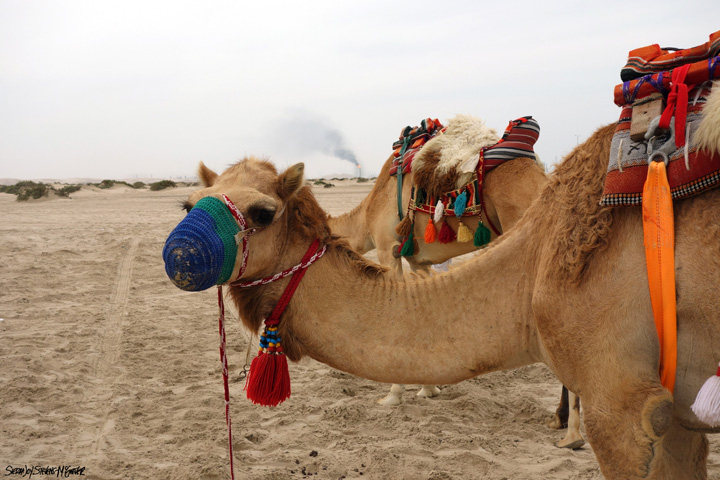 camile Arabia Saudita isi schimba printul mostenitor
