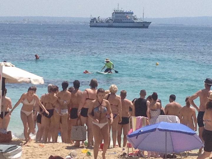 rechin1 Falci la Mallorca