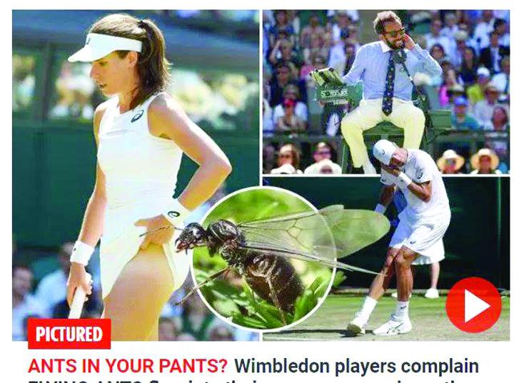 19866499 816094978556504 223982595 n Atacul furnicilor la Wimbledon. Insectele au bombardat pe toata lume!
