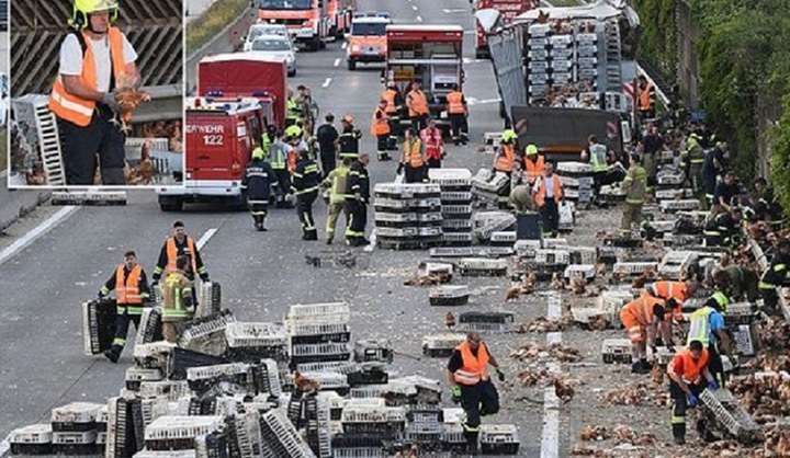 chicken austria tw O autostrada din Austria, blocata de 7.000 de gaini