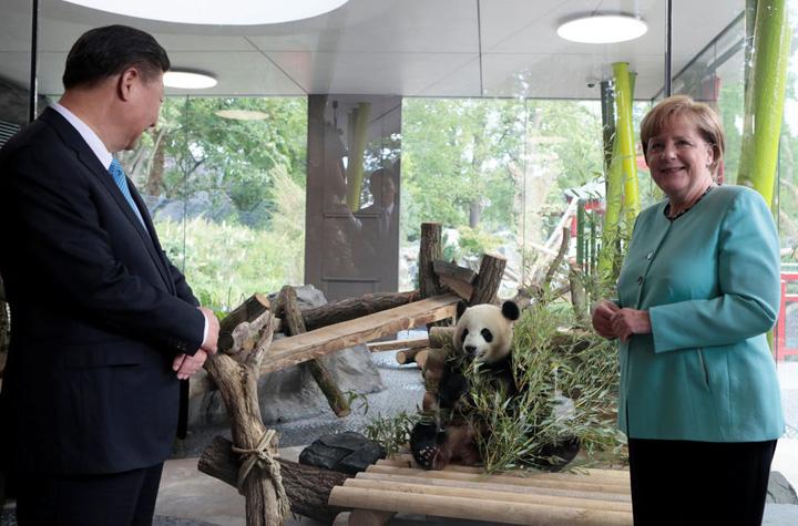 merkel 1 Merkel, topita dupa ursii Panda
