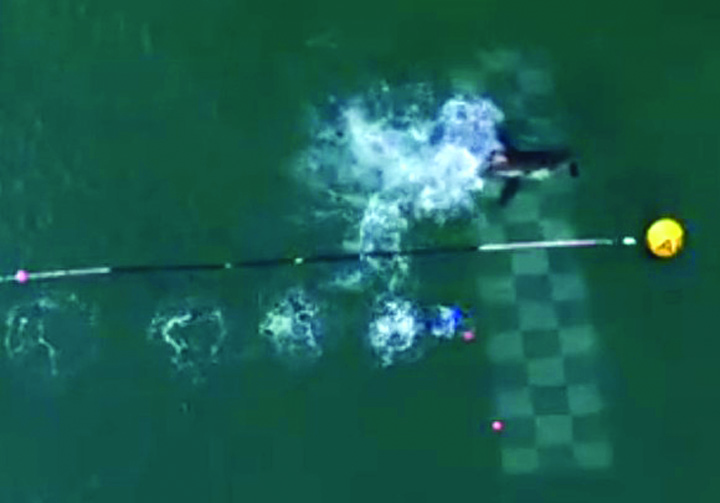 michael phepls intrecere cu un rechin Michael Phelps a pierdut intrecerea cu un rechin!