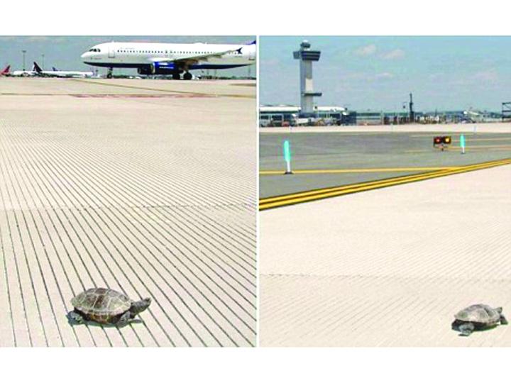 testoase 1 Testoasele au blocat aeroportul JFK