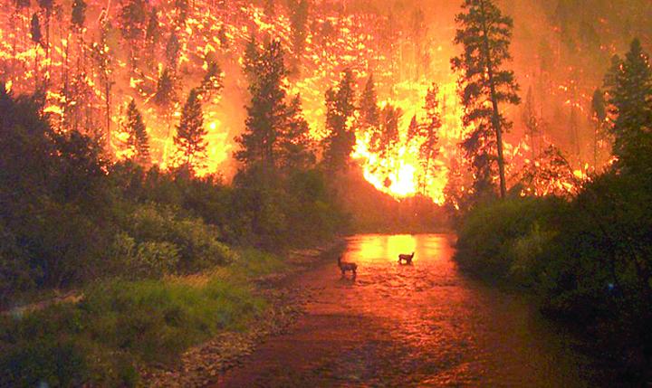deer wildfire Canicula va ucide anual 152.000 de europeni