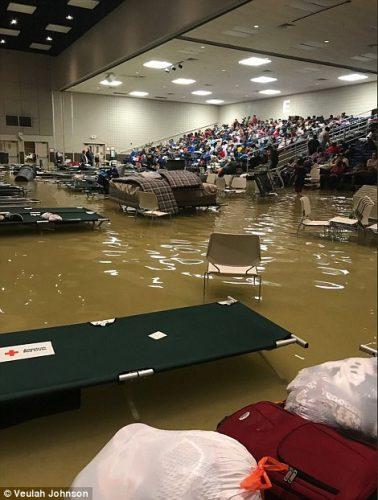 inundatie2 378x500 Dupa uraganul Harvey, vin furnicile de foc