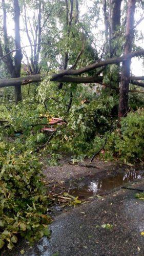 21751474 1556387721090354 2317239440013333613 n copac 281x500 Cluj: 8 oameni blocati pe un drum   copaci cazuti pe carosabil