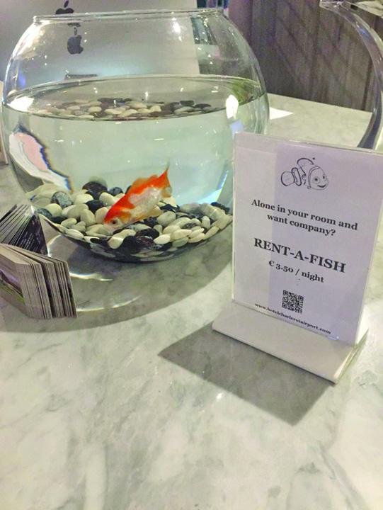"peste hotel ""Rent a fish"", ultima gaselnita hoteliera"