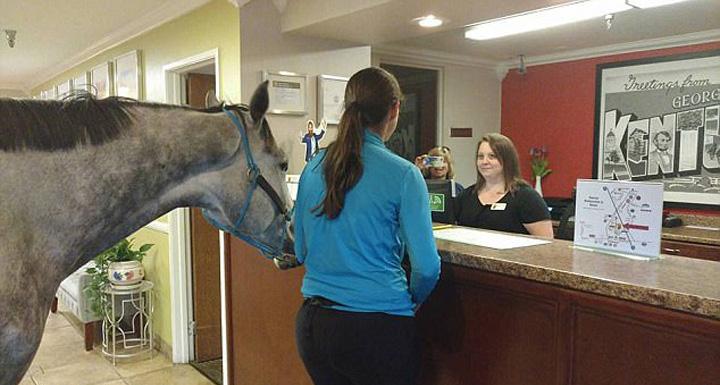 cal Cu calul la hotel