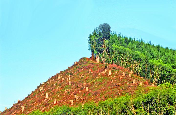 paduri 300.000 km2 de paduri au disparut anul trecut