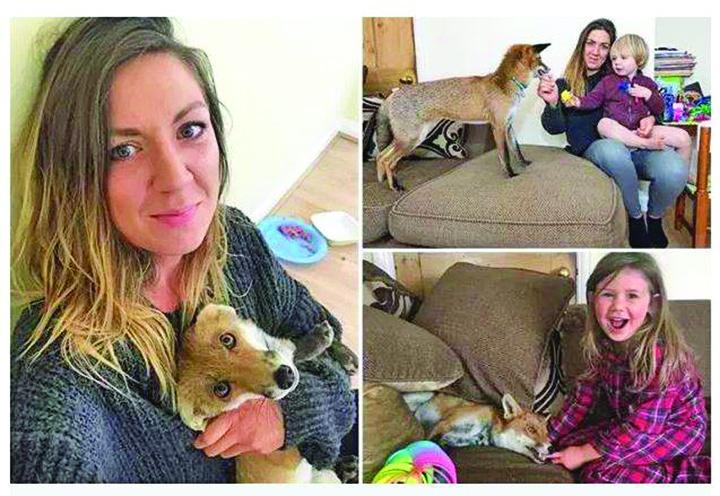 23805491 893311500834851 903174774 n Tine in casa o vulpe, animal de companie pentru cei doi copii!