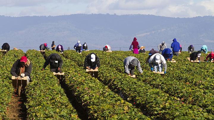 canada Canada, plantatie pentru un milion de imigranti