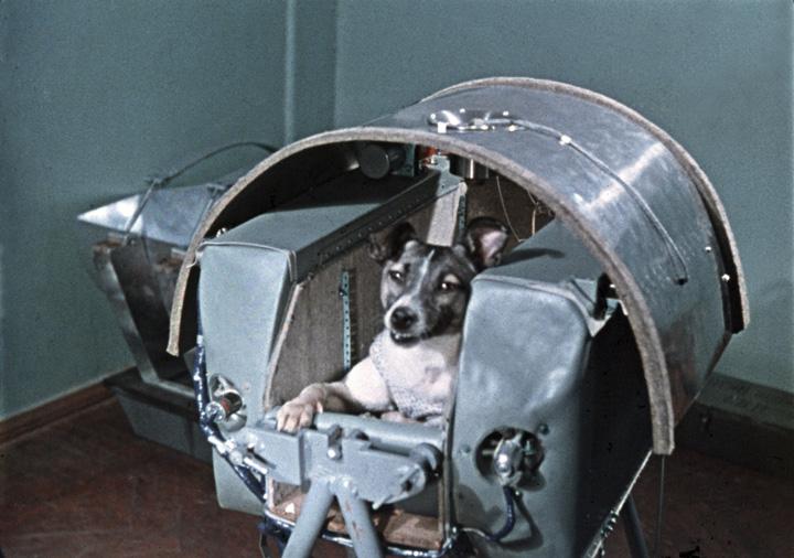 laika1 Cateaua Laika, primul cosmonaut al planetei