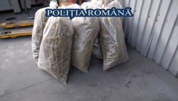 1 2 350x198 VIDEO. Politistii romani au distrus peste o tona de droguri confiscate