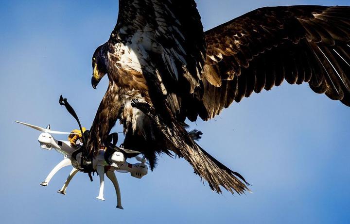 drone Dronele, mai tari decat vulturii