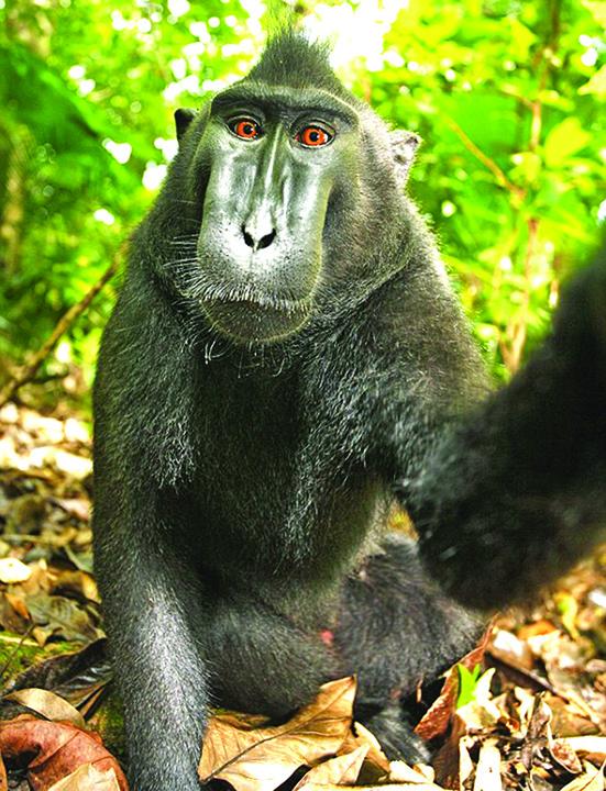 maimuta 1 O maimuta, personalitatea anului