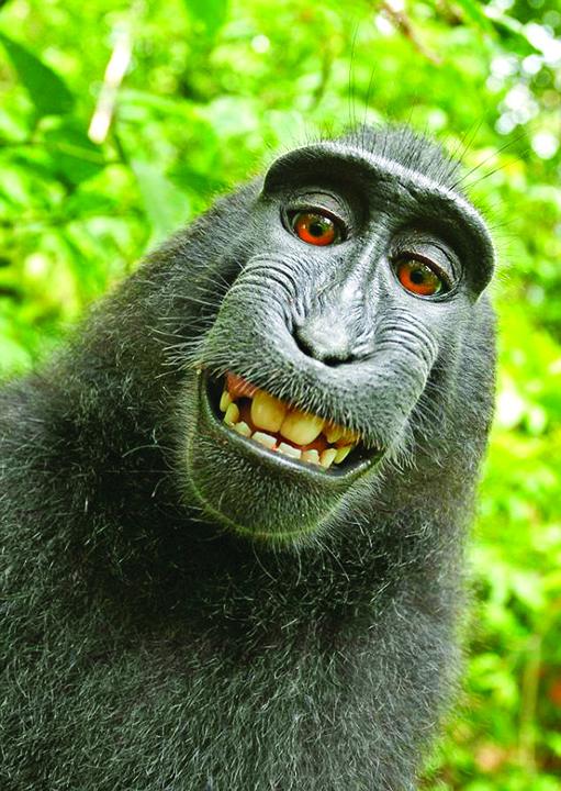 maimuta O maimuta, personalitatea anului
