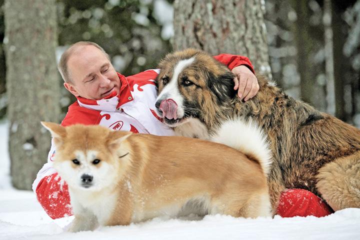 putin caini Putin, scandal cu pisici si caini