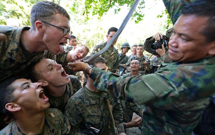 soldati cobra 1 Soldatii americani beau sange de cobra