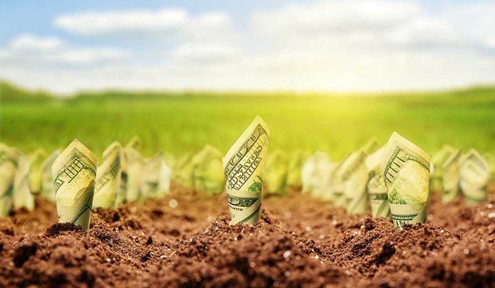 clanuri 720x419 Mafia italiana stoarce profituri uriase din agricultura