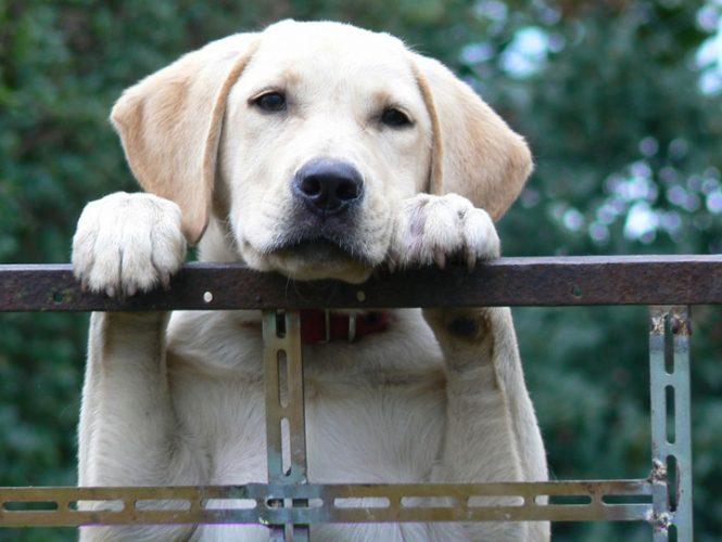 cod animale 665x500 Primul cod juridic pentru animale