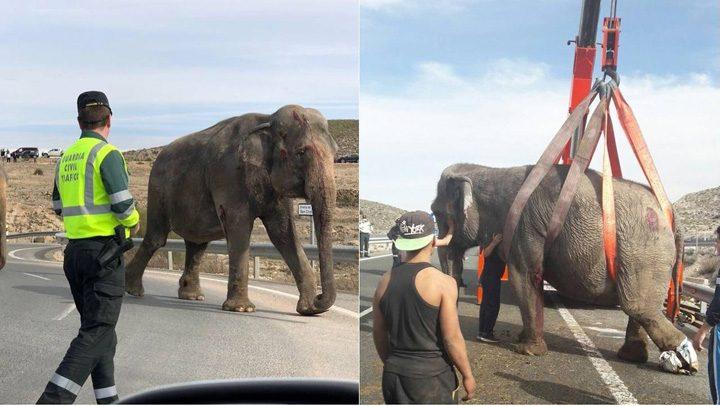 1 2 720x406 S a rasturnat camionul cu elefanti