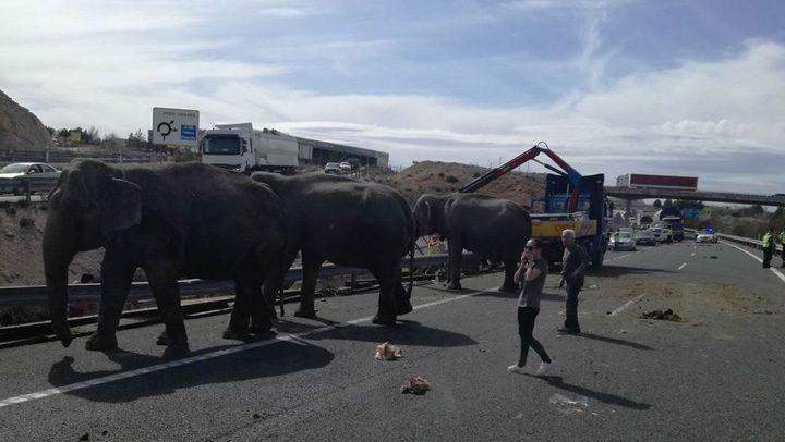 3 720x406 S a rasturnat camionul cu elefanti