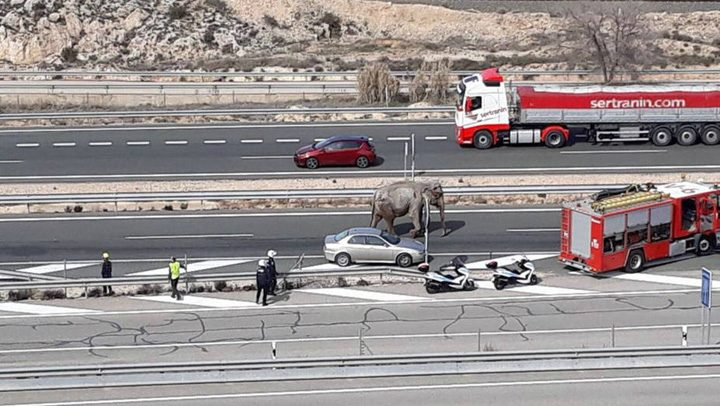 5 720x406 S a rasturnat camionul cu elefanti