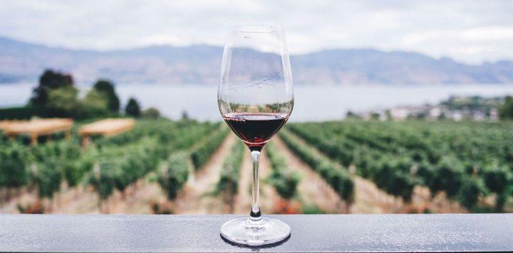 teste adn 720x356 Teste ADN pentru vinul care ti se potriveste