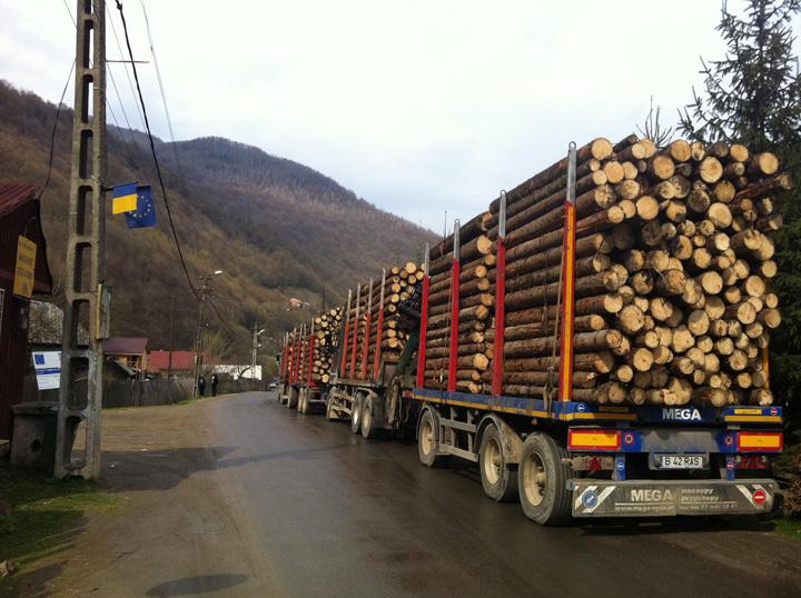 Holzindustrie Schweighofer DIICOT da cu barda in Holzindustrie Schweighofer: directori pusi sub invinuire