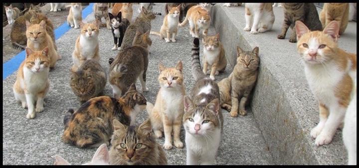 turism pisici 2 Turismul francez, sabotat de ...pisici