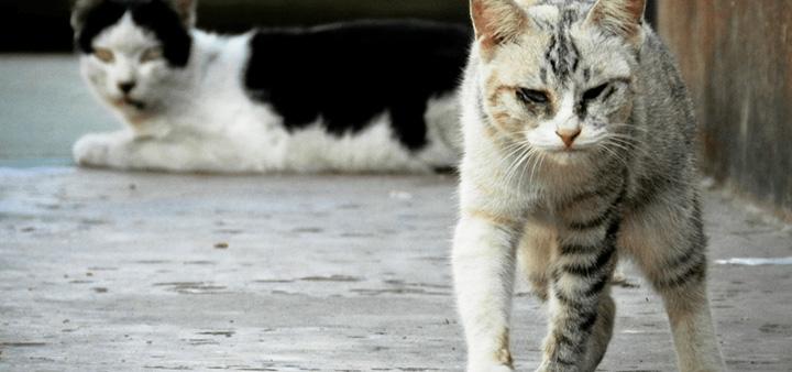 turism pisici Turismul francez, sabotat de ...pisici