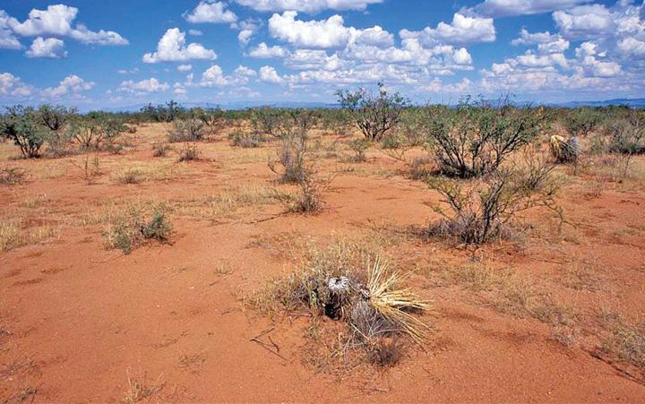 Desertificare Desertificarea Romaniei i a alertat pe europeni. Nu si pe noi