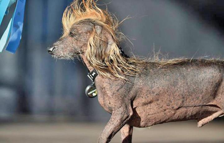 caine2 El este cel mai urat caine din lume