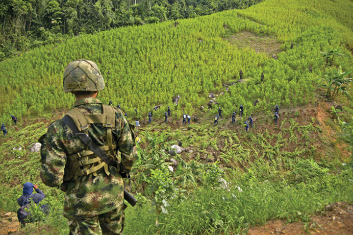 columbia Productiile de opiu si cocaina au explodat