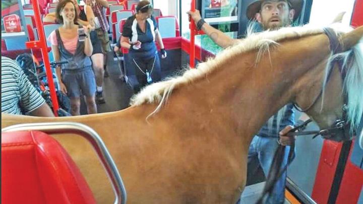cal tren S a urcat cu calul in tren