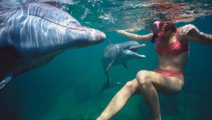 delfin 2 720x407 Delfin in calduri, scaldatul interzis !